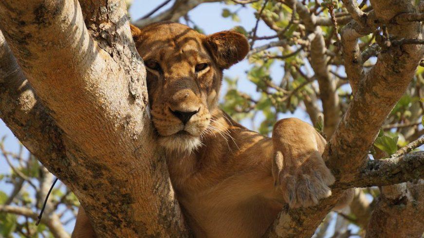 león africa vacaciones familias con hijos