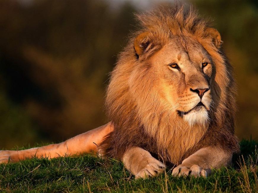 rey leon verano 2020