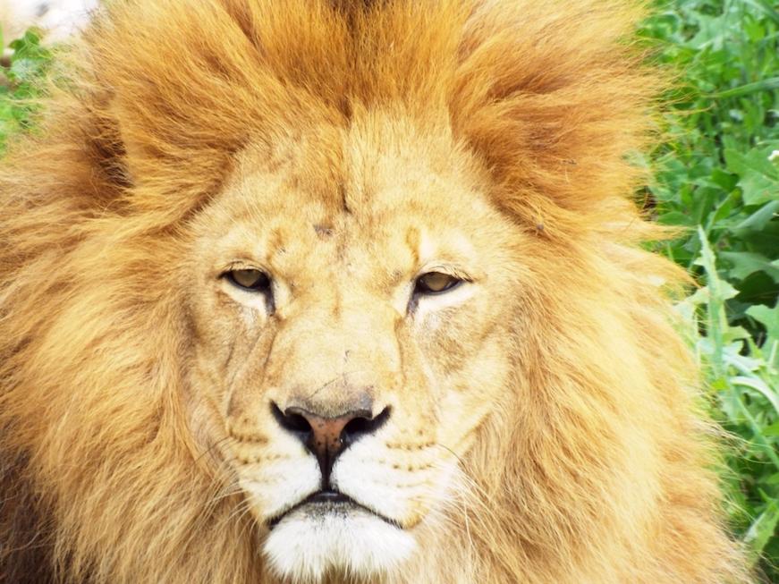 buscando al rey león África viajes en familia