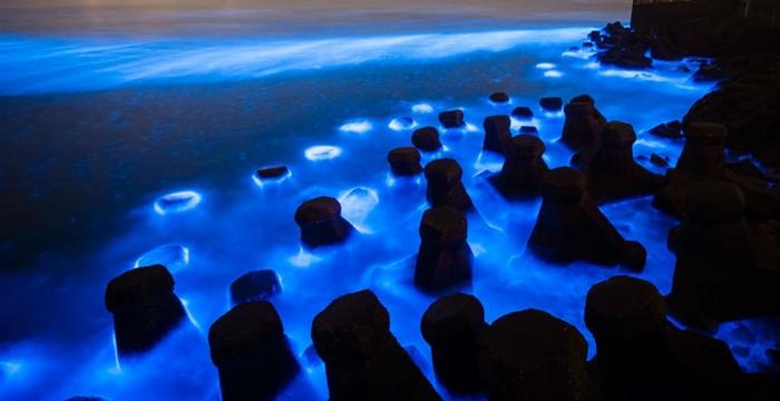 laguna luminosa jamaica