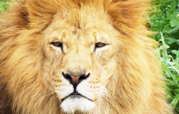 leon buscando