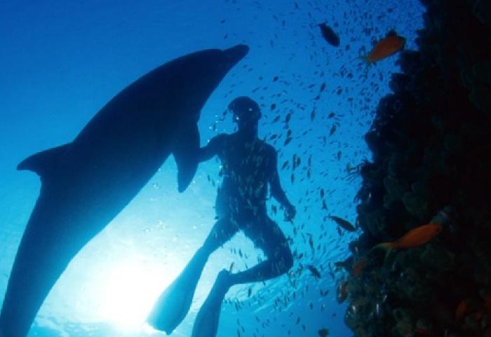 delfines salvajes terceira