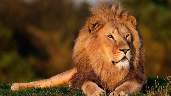 rey leon verano 2018