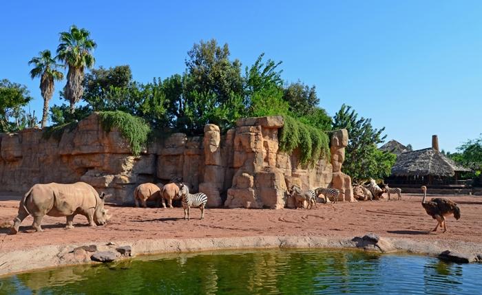 Bioparc parque animal viaja con tu familia - Telefono bioparc valencia ...