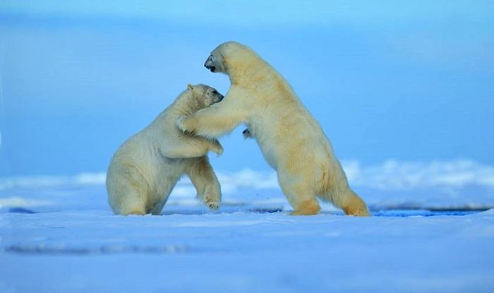 viaje a laponia objetivo aurora boreal